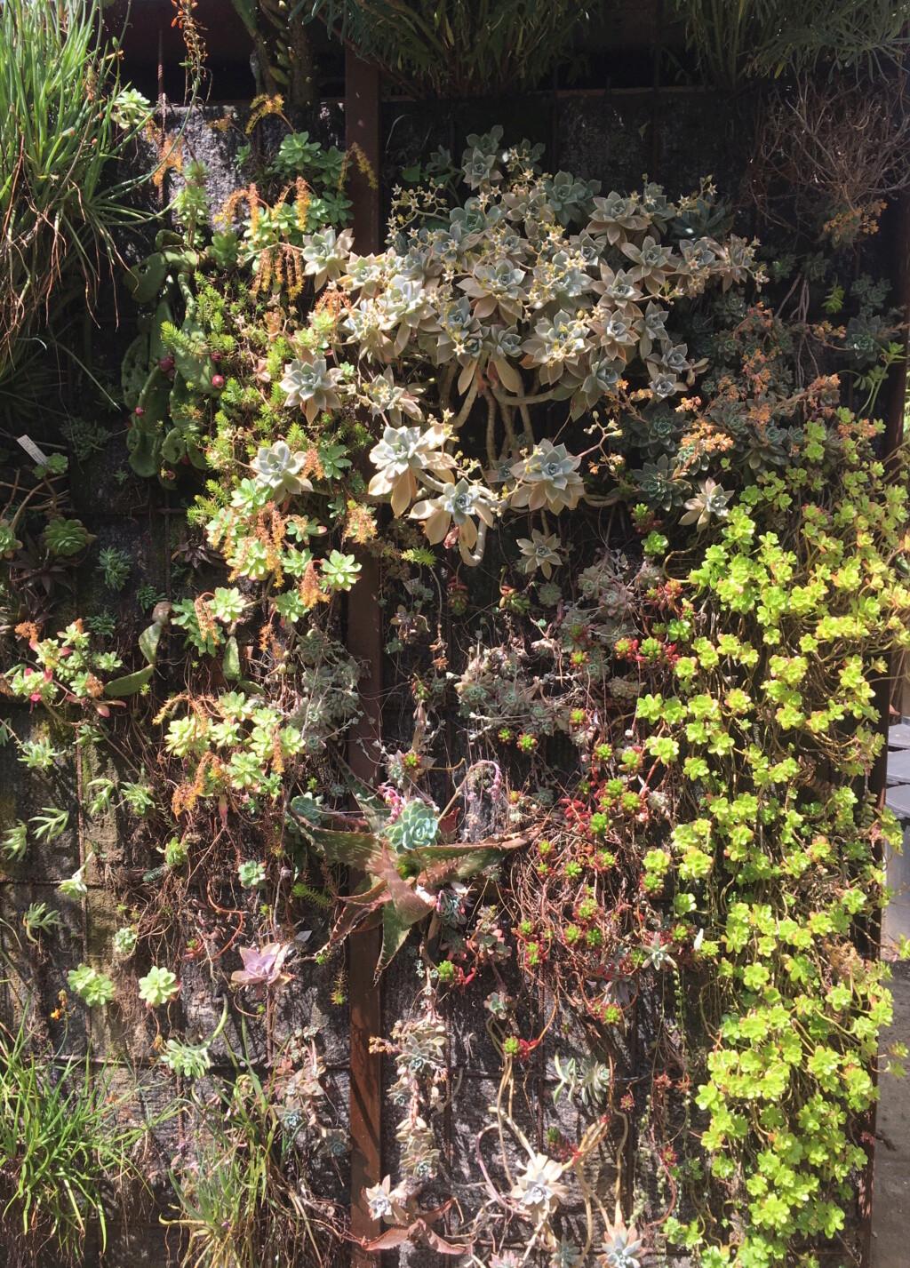 Mon mur végétal de succulentes - Page 2 Img_8621