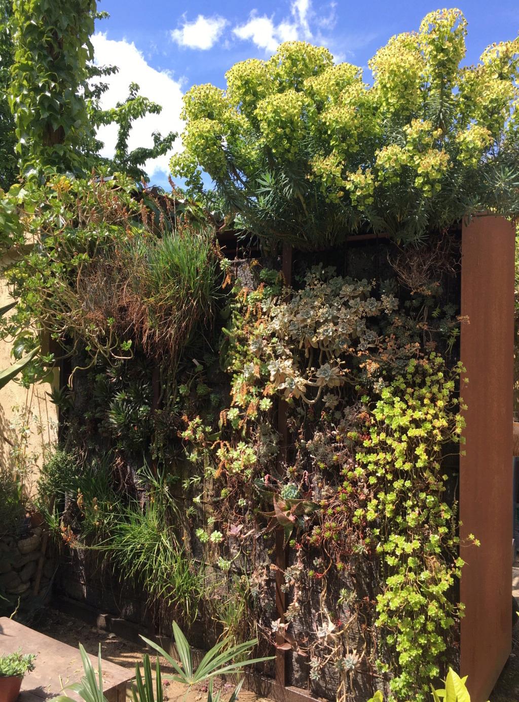 Mon mur végétal de succulentes - Page 2 Img_8622