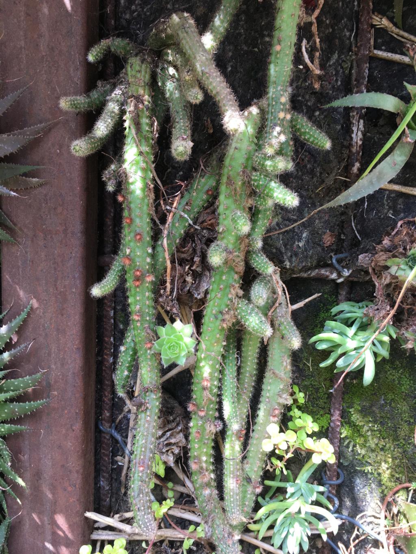 Mon mur végétal de succulentes - Page 2 Img_8713