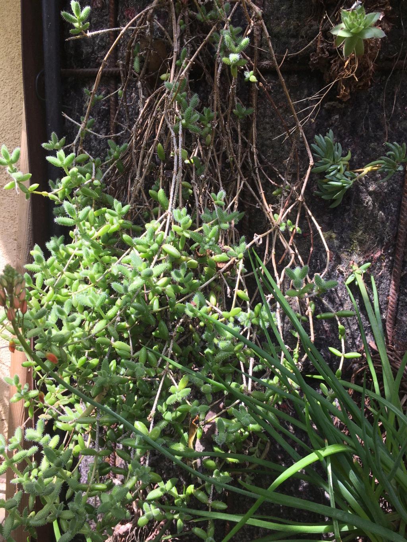 Mon mur végétal de succulentes - Page 2 Img_8714
