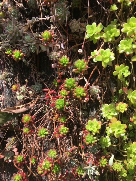 Mon mur végétal de succulentes - Page 2 Img_8715