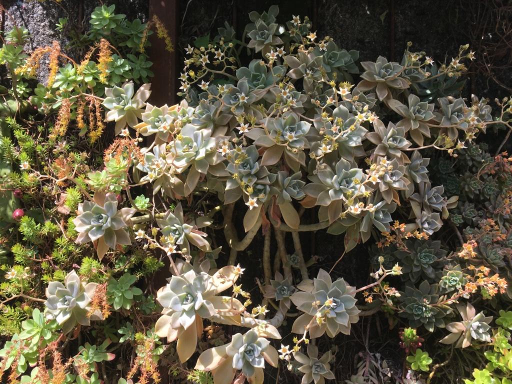 Mon mur végétal de succulentes - Page 2 Img_8716