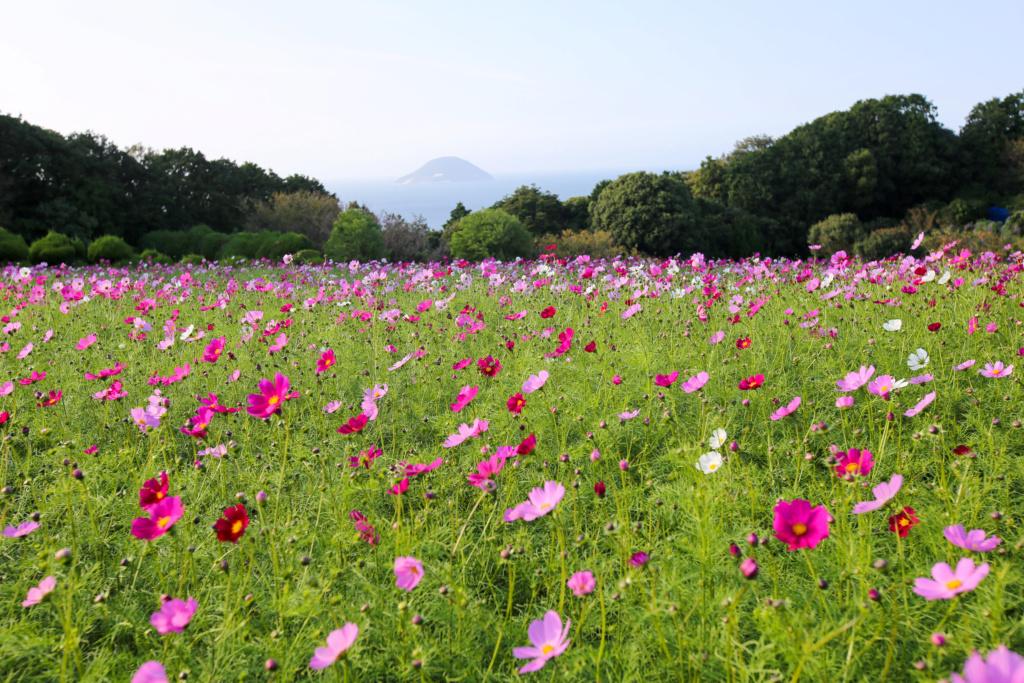 """Déficoncours """"micro paysages"""" - les votes Japon-73"""