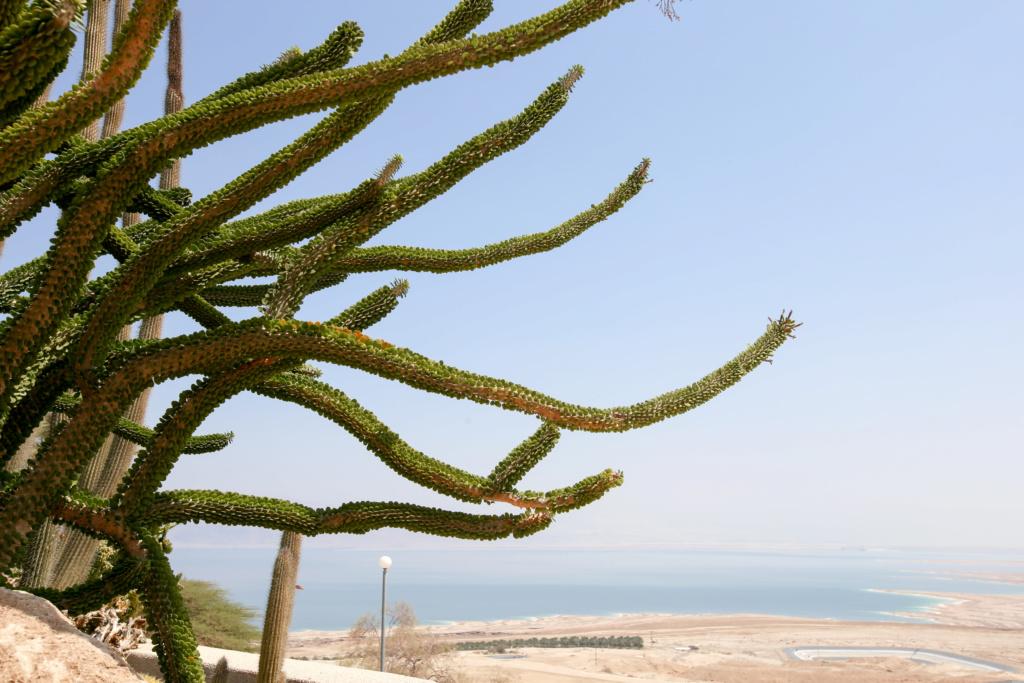 Israël - Jardin botanique d'Ein Gedi Mer_mo11