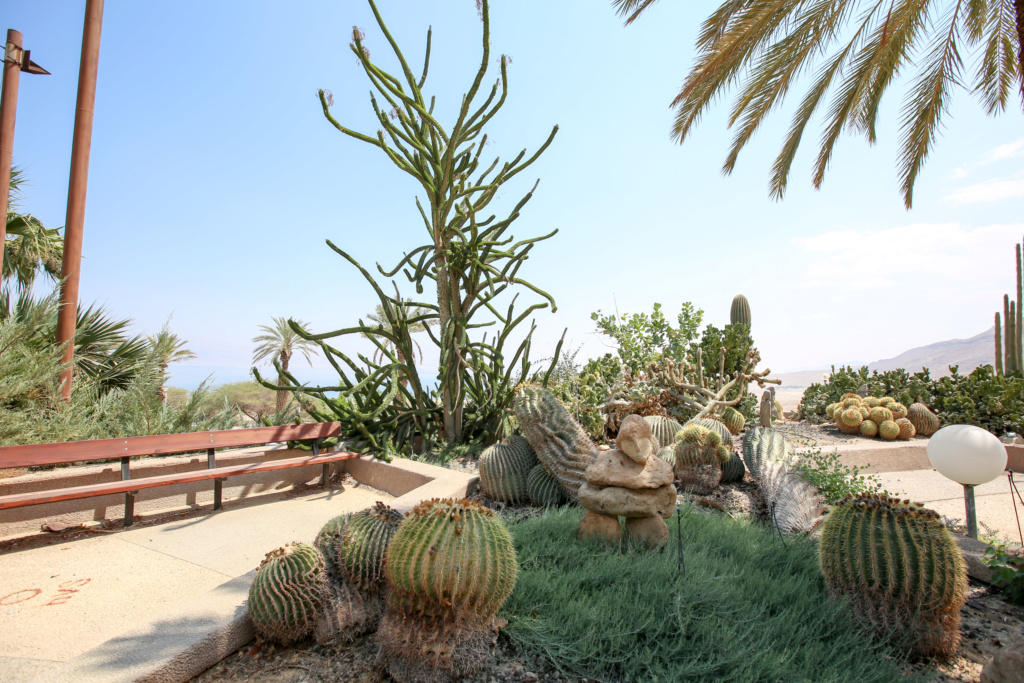 Israël - Jardin botanique d'Ein Gedi Mer_mo14