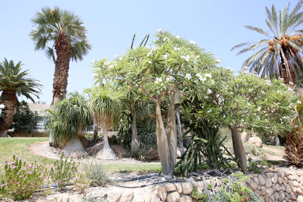 Israël - Jardin botanique d'Ein Gedi Mer_mo15