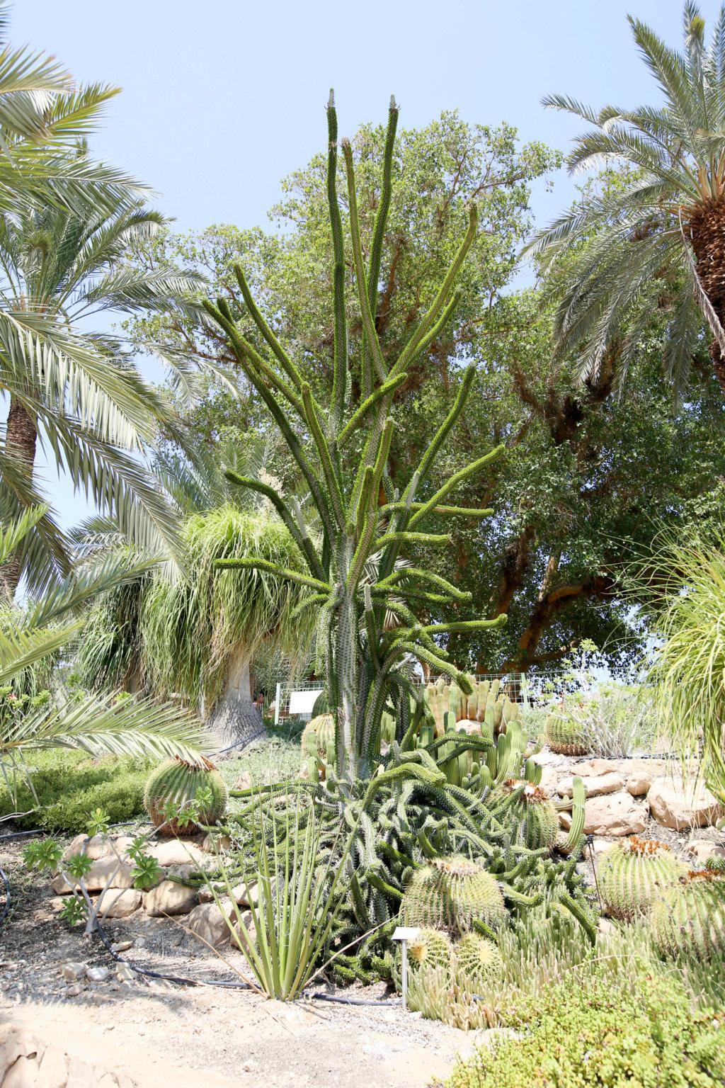Israël - Jardin botanique d'Ein Gedi Mer_mo16