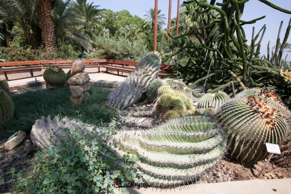 Israël - Jardin botanique d'Ein Gedi Mer_mo17
