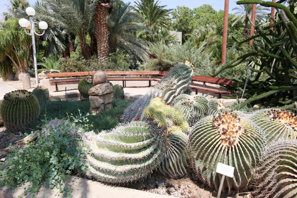 Israël - Jardin botanique d'Ein Gedi Mer_mo18
