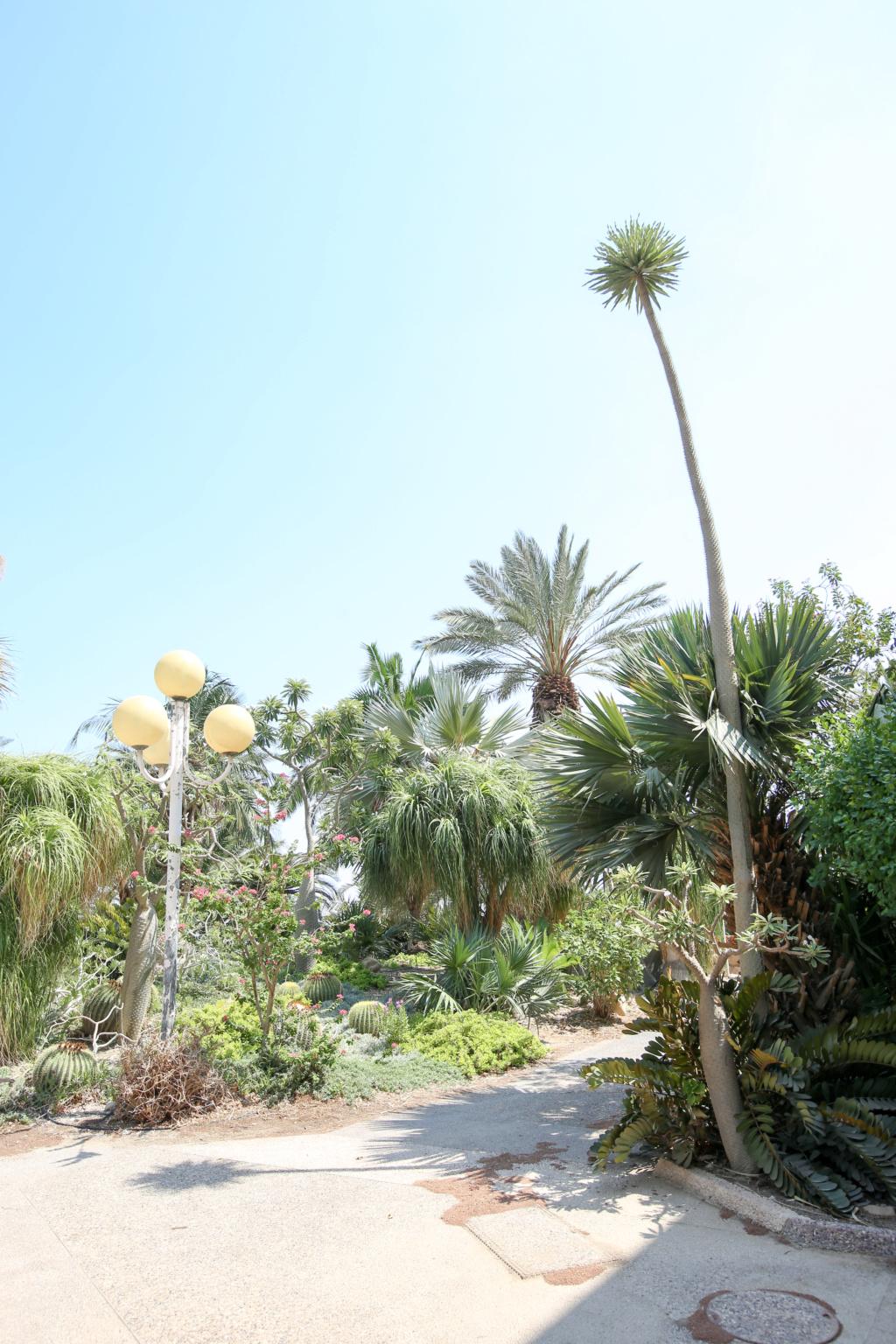 Israël - Jardin botanique d'Ein Gedi Mer_mo19