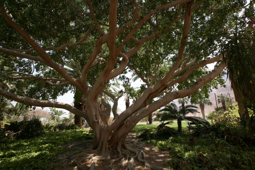 Israël - Jardin botanique d'Ein Gedi Mer_mo20