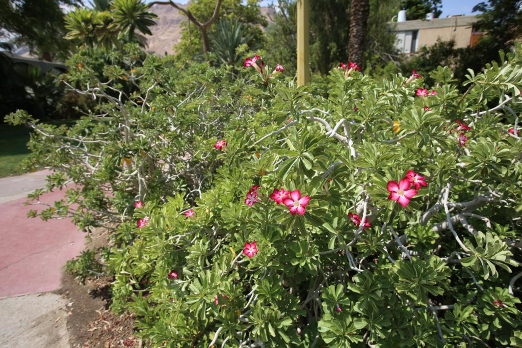 Israël - Jardin botanique d'Ein Gedi Mer_mo23