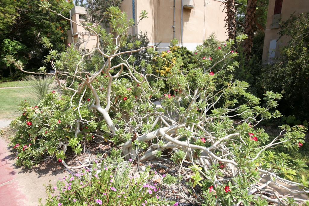 Israël - Jardin botanique d'Ein Gedi Mer_mo24