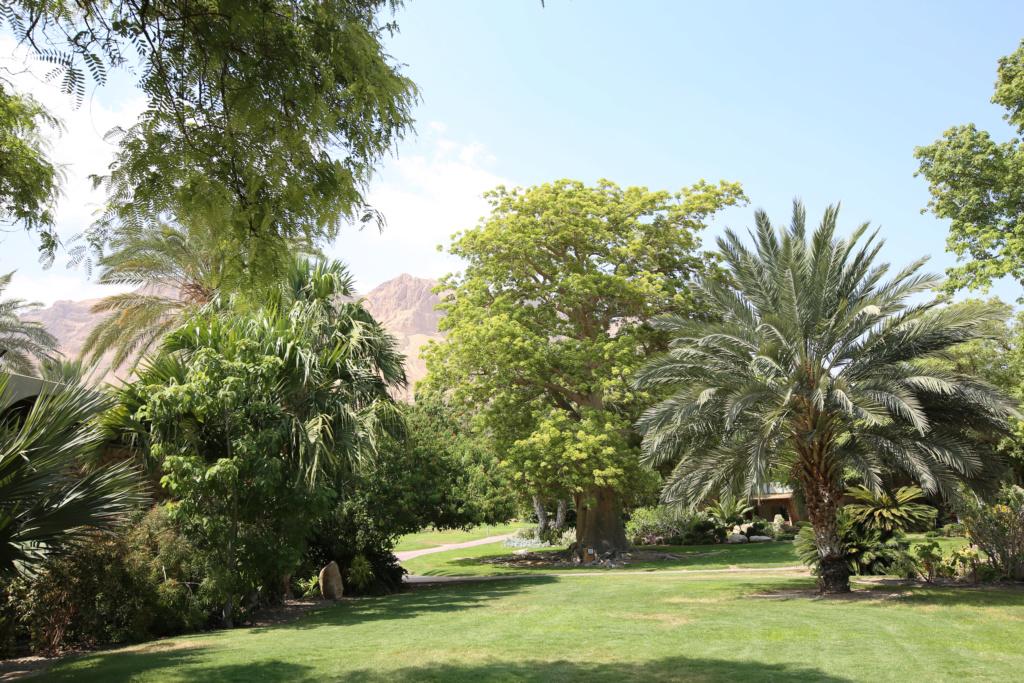 Israël - Jardin botanique d'Ein Gedi Mer_mo25