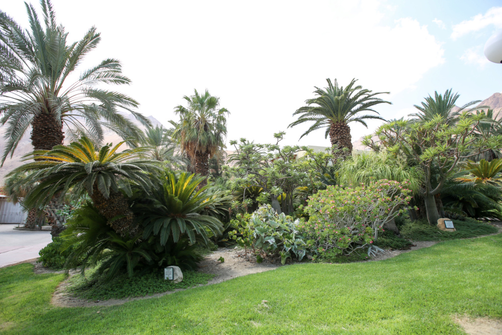 Israël - Jardin botanique d'Ein Gedi Mer_mo29