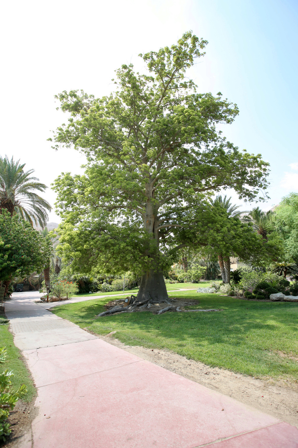 Israël - Jardin botanique d'Ein Gedi Mer_mo30