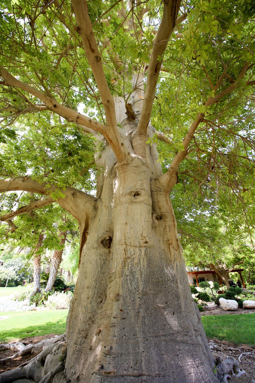 Israël - Jardin botanique d'Ein Gedi Mer_mo31