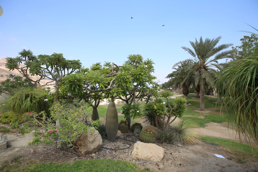 Israël - Jardin botanique d'Ein Gedi Mer_mo34