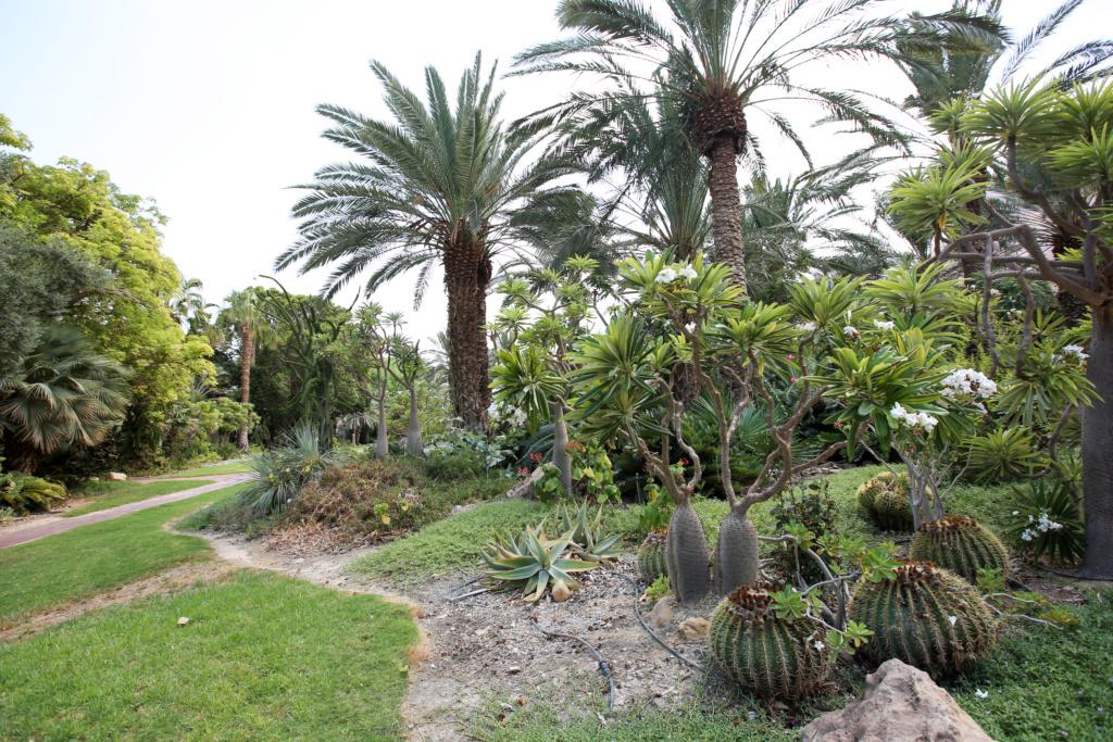 Israël - Jardin botanique d'Ein Gedi Mer_mo35