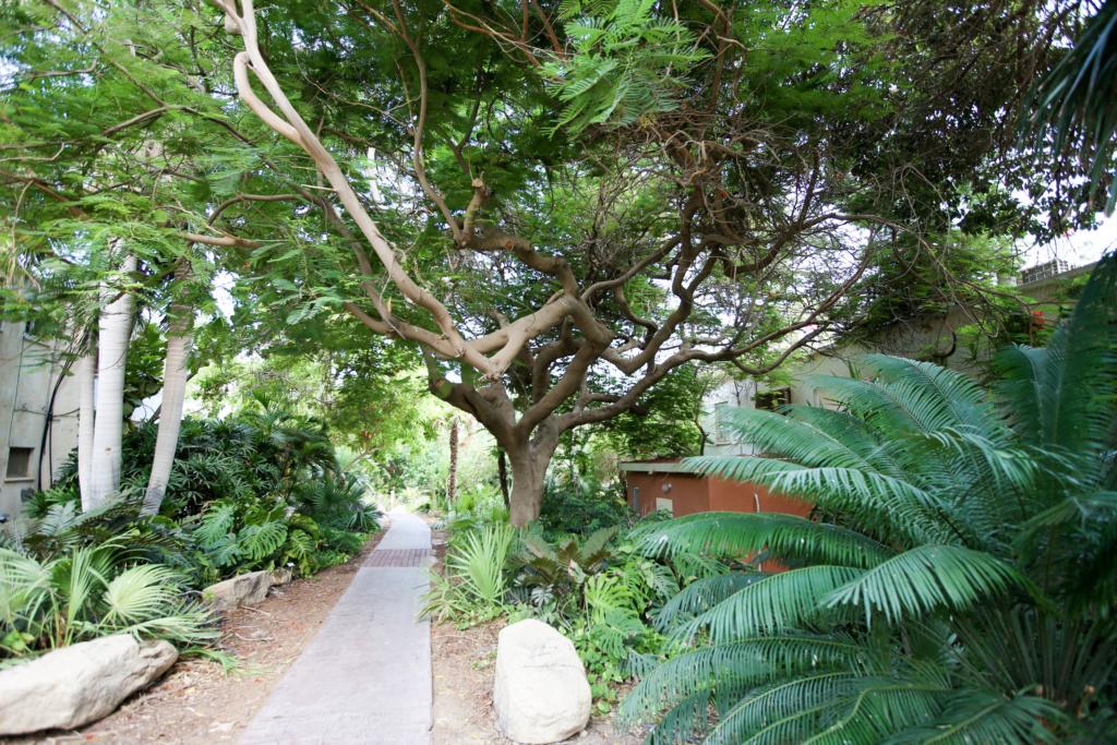 Israël - Jardin botanique d'Ein Gedi Mer_mo36