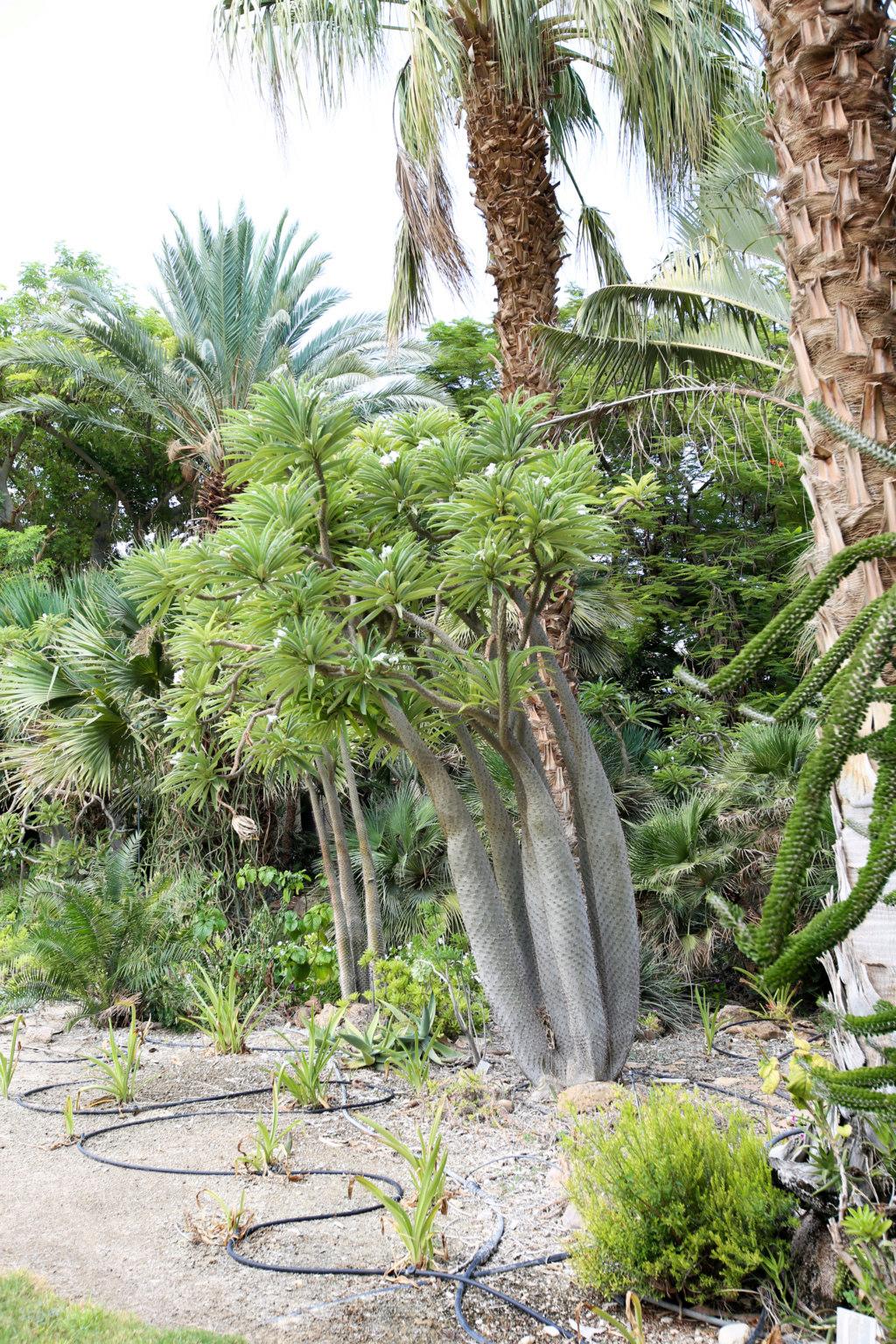 Israël - Jardin botanique d'Ein Gedi Mer_mo37