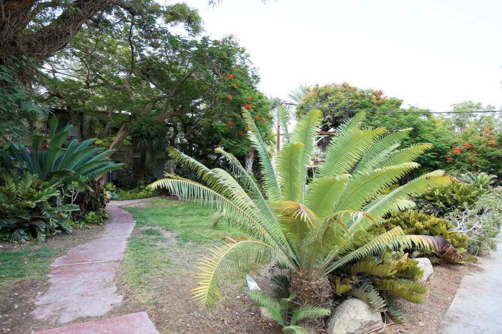 Israël - Jardin botanique d'Ein Gedi Mer_mo38