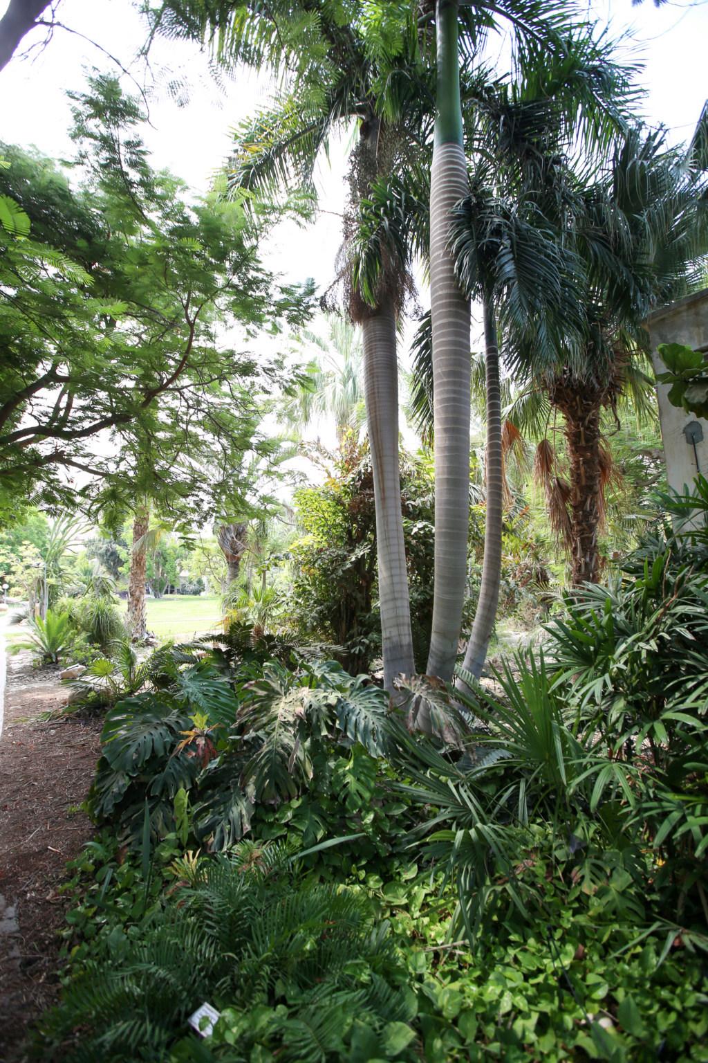 Israël - Jardin botanique d'Ein Gedi Mer_mo40