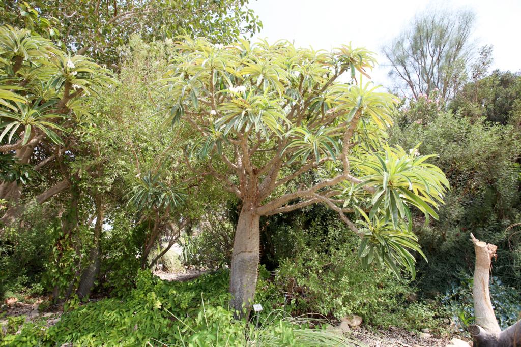 Israël - Jardin botanique d'Ein Gedi Mer_mo41
