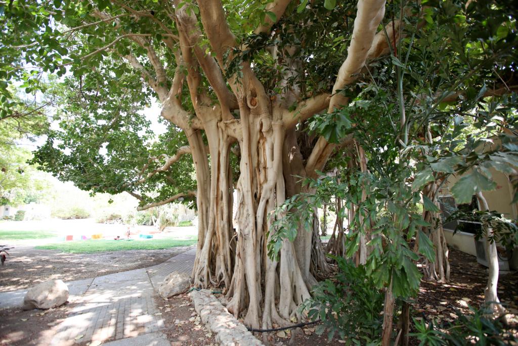 Israël - Jardin botanique d'Ein Gedi Mer_mo44