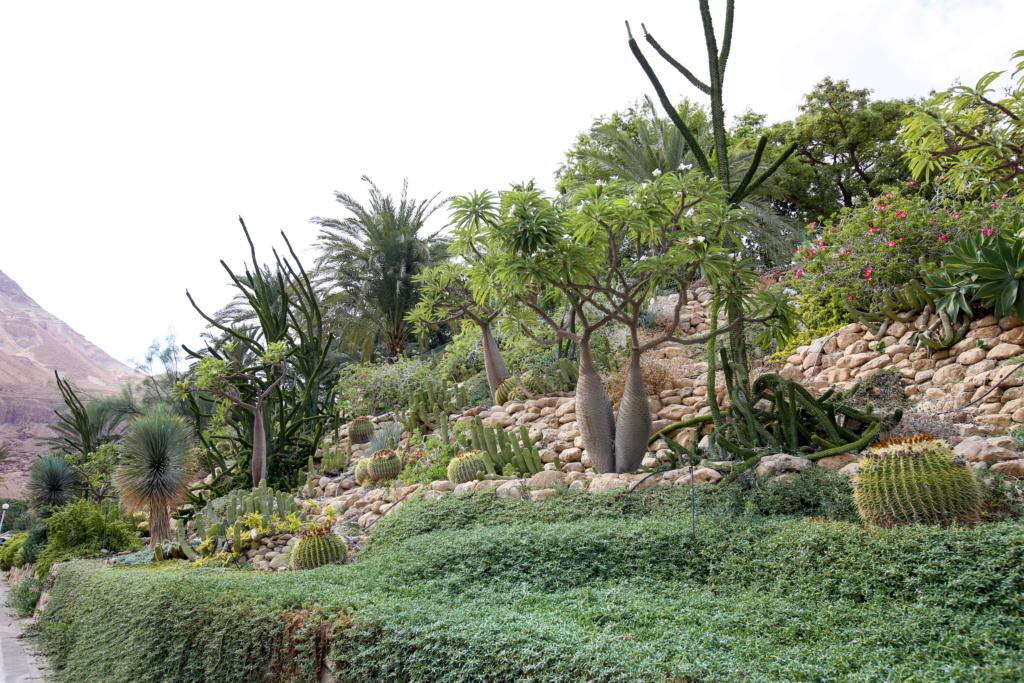 Israël - Jardin botanique d'Ein Gedi Mer_mo45