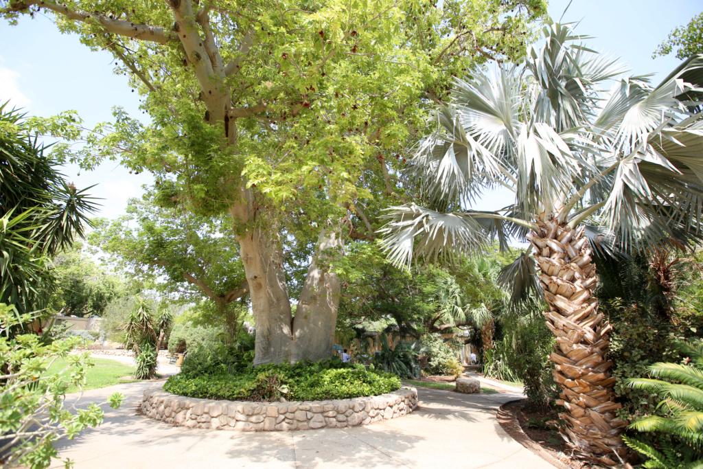 Israël - Jardin botanique d'Ein Gedi Mer_mo46