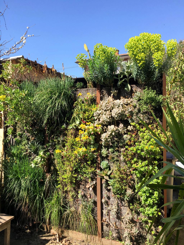 Mon mur végétal de succulentes - Page 2 Mur_110