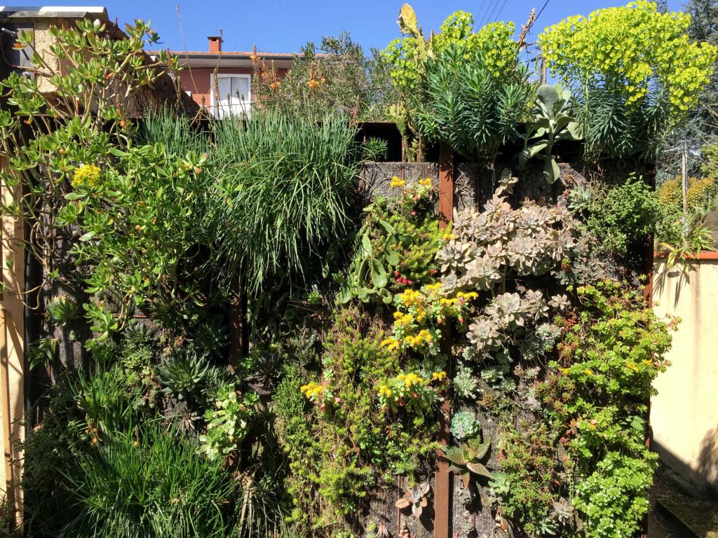 Mon mur végétal de succulentes - Page 2 Mur_210