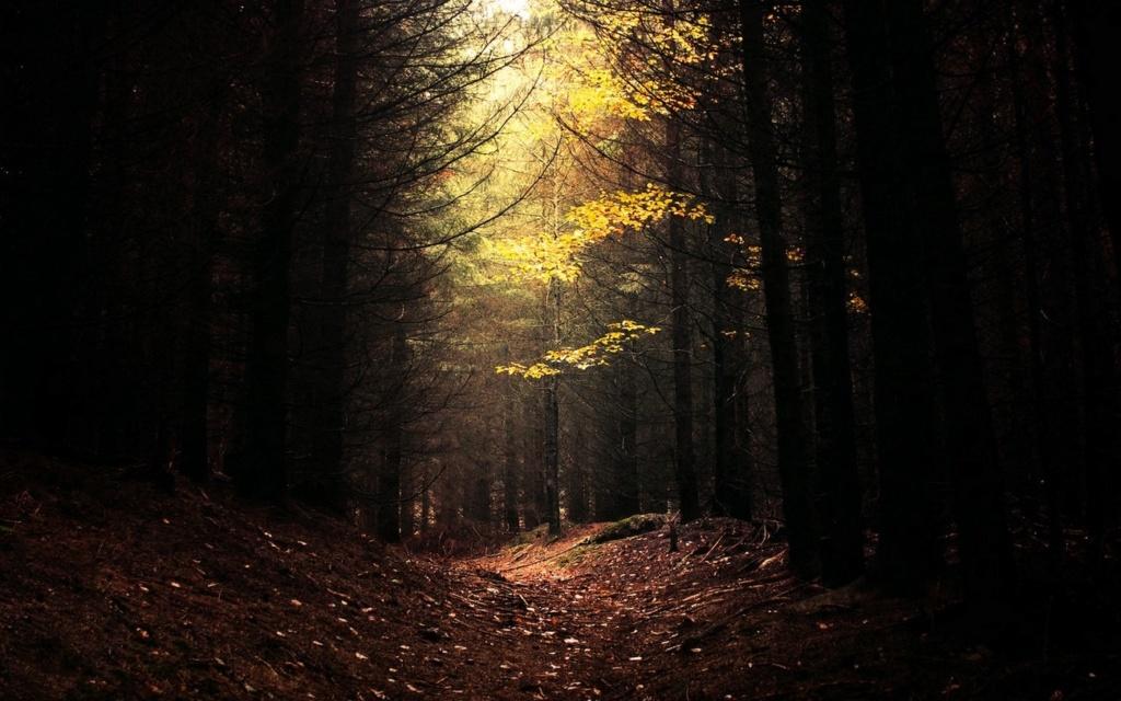 1° - Entrada de Turnurulon - Floresta Nature10