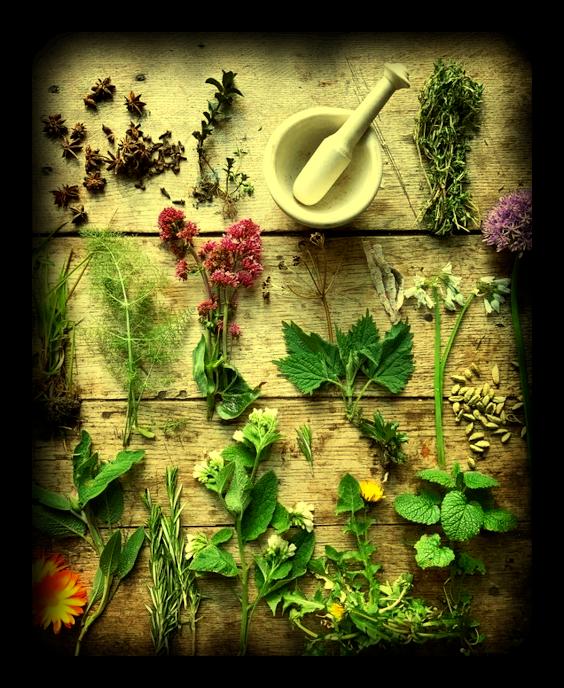 Скрытая сила трав: Основное руководство по Магии Трав. 120