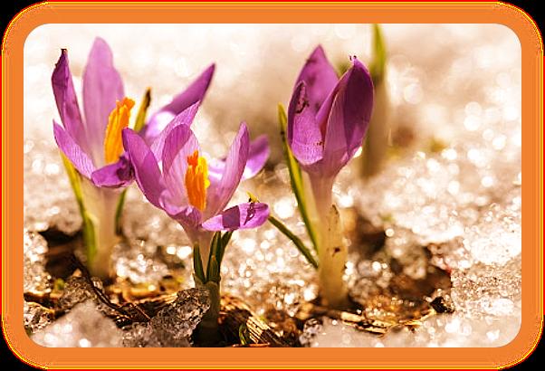 Проведите Весенний Ритуал Возрождения для Остары. Aa_3610