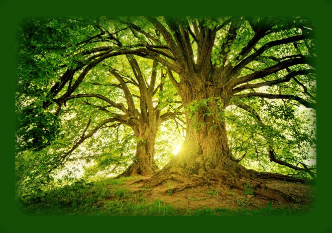 Правильное общение с деревьями. Auu10