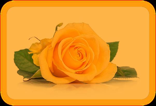 Любовные заклинания из Традиции Фей. E_6410
