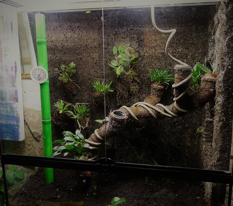 Urwald im Glas...meine Wohnzimmervitrine 130