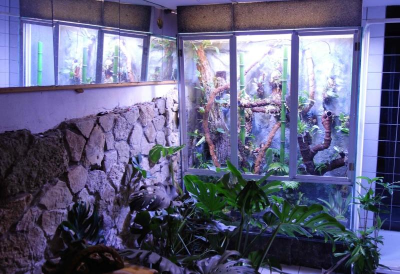 Urwald im Glas...meine Wohnzimmervitrine 1v11