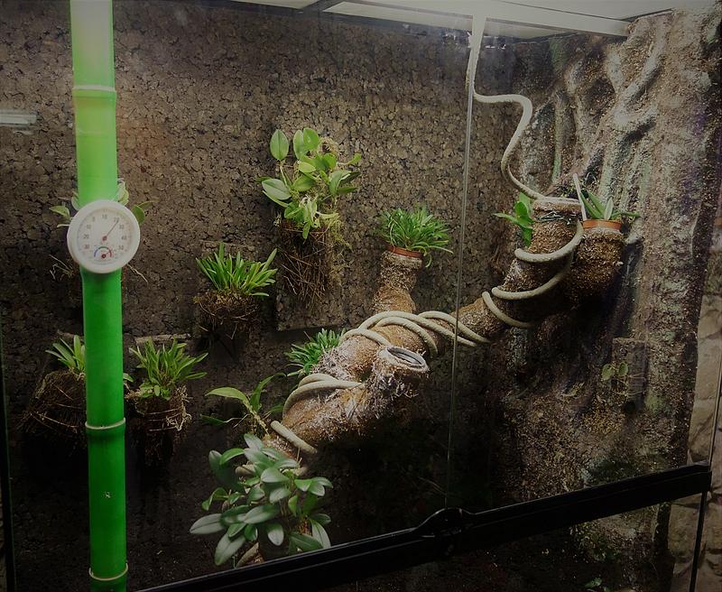 Urwald im Glas...meine Wohnzimmervitrine 231