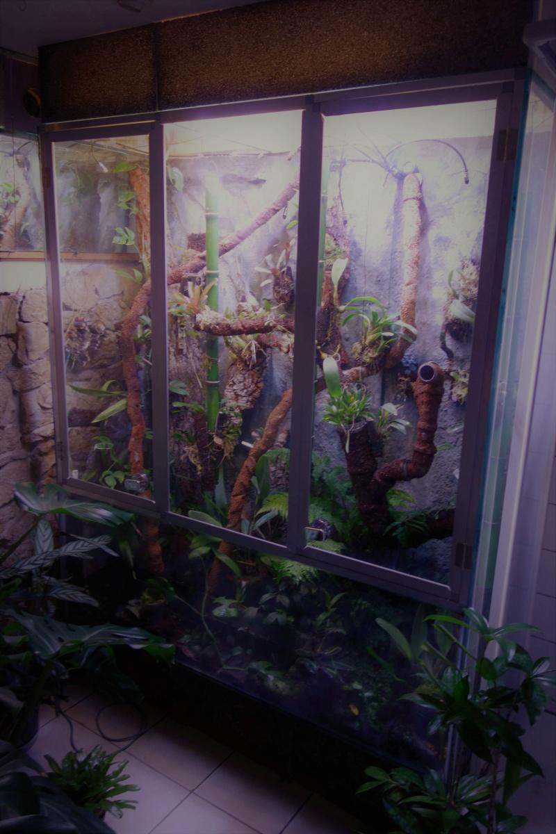 Urwald im Glas...meine Wohnzimmervitrine 2v10