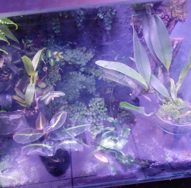 Urwald im Glas...meine Wohnzimmervitrine 4v10