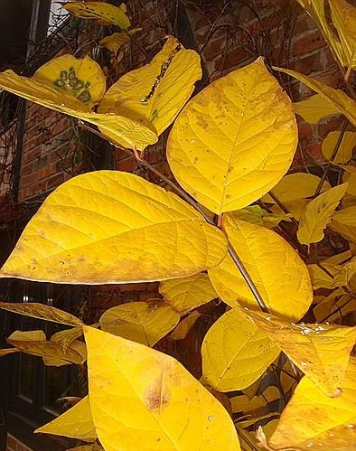 Herbststimmung - Seite 2 Comp_d13