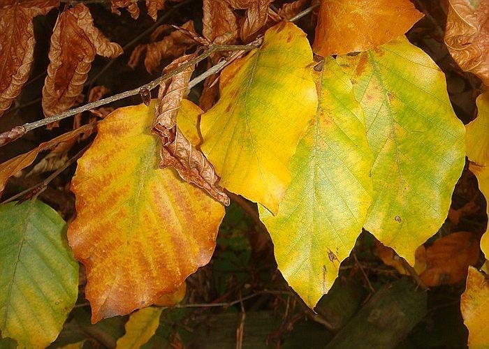 Herbststimmung - Seite 2 Comp_d15
