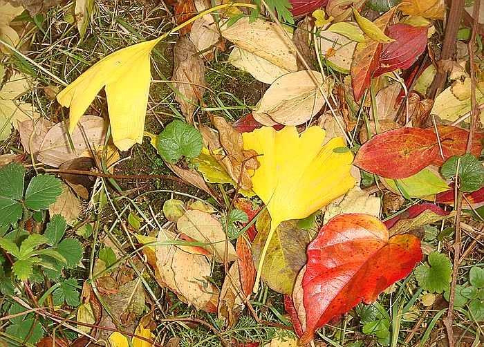 Herbststimmung - Seite 2 Comp_d18