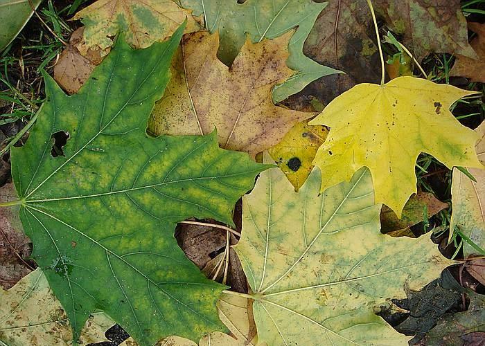 Herbststimmung - Seite 2 Comp_d19