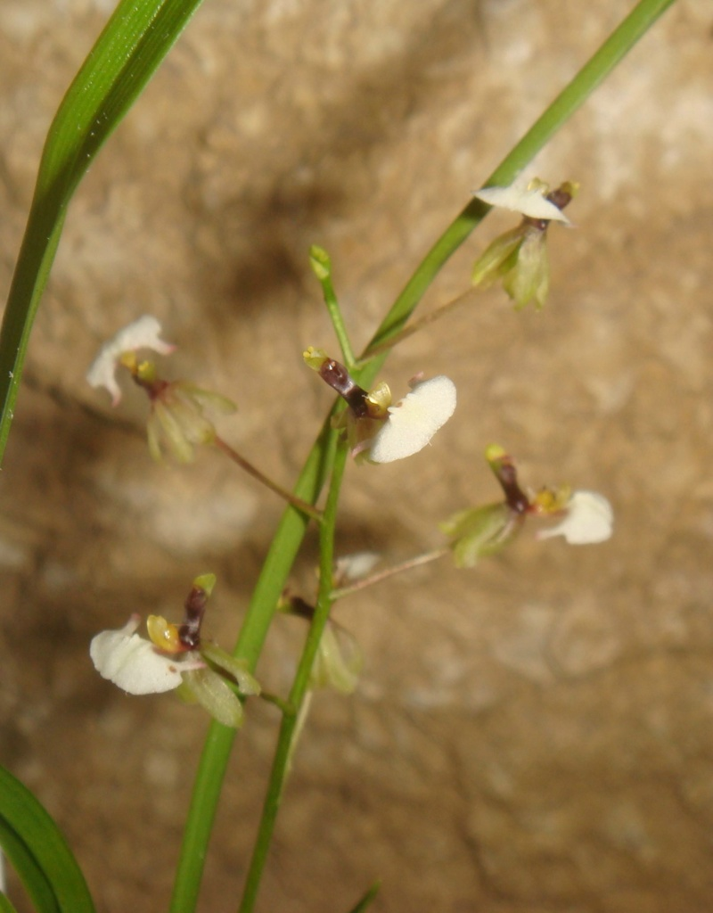 Orchideen-Neuzugang 2 - Seite 10 Compds38
