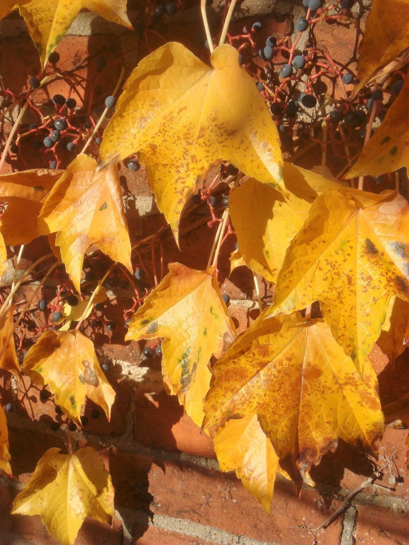 Herbststimmung - Seite 3 Compds56