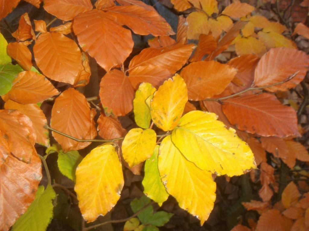 Herbststimmung - Seite 3 Compds61